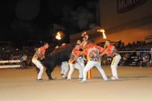 Amposta programa 43 actes de bous per a la setmana de festes