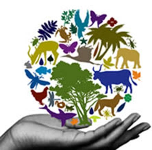 BIODIVERSITAT 25 04 2016 : Lets´s Clean Up Europe
